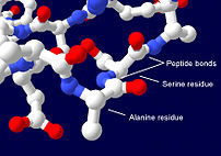 Section of a protein structure showing serine ...